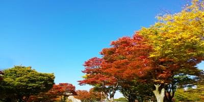 紅葉の公園